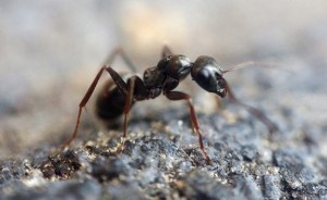 ant in basement