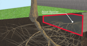 Root barrier foundation protection