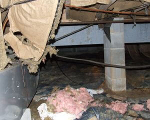 Crawl space damage in Madison, AL