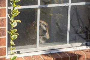dog at new home