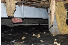 bugs in basement